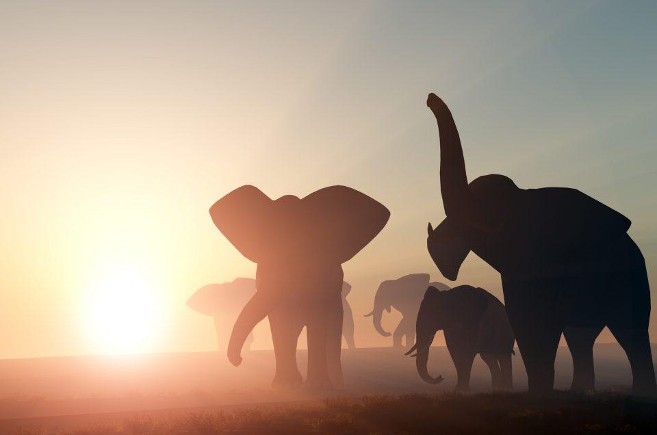 Botswana: Natura selvaggia, cieli stellati e l'incontro con gli ultimi boscimani.
